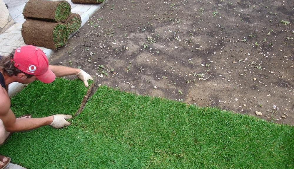 Как сажать газон своими руками 85